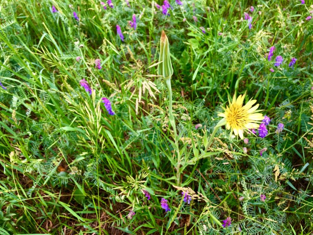 Photo of wildflowers.